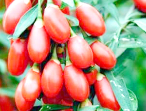 ягоды годжи для похудения